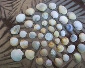 Natural sea shells, clam, cockle, craft shells, jewelry supplies, coastal beach decor (Lot 134)