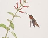 Rufus Hummingbird 2  (Limited Edition Giclee Print)