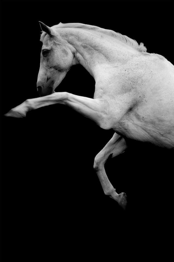 White stallion photo, rearing horse, equine art, horse photo, 'the horse', animal photo,