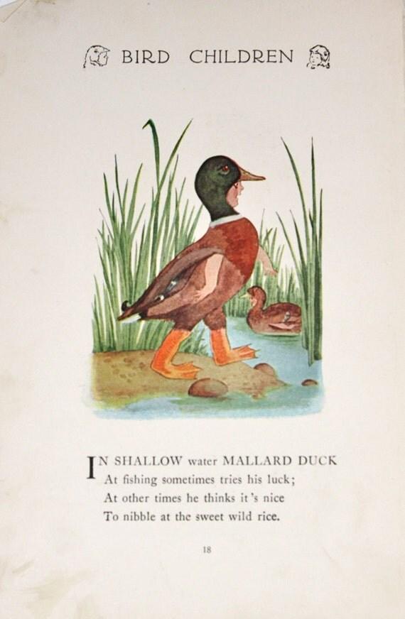 RESERVED listing for Gillian6010: Mallard Duck and Snow Goose Bird Children- 1912 Vintage Childrens Illustration