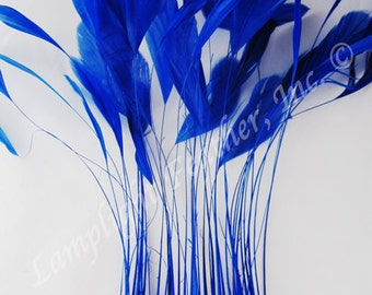 "Stripped Coque,  Royal Blue, 6-8"" long,per 25 feathers (coqsblu25)"