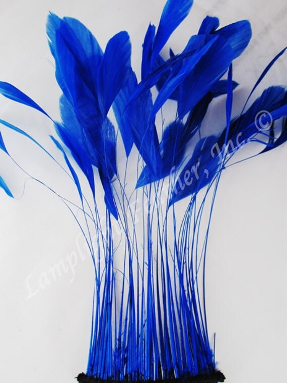 """Stripped Coque,  Royal Blue, 6-8"""" long,per 25 feathers (coqsblu25)"""