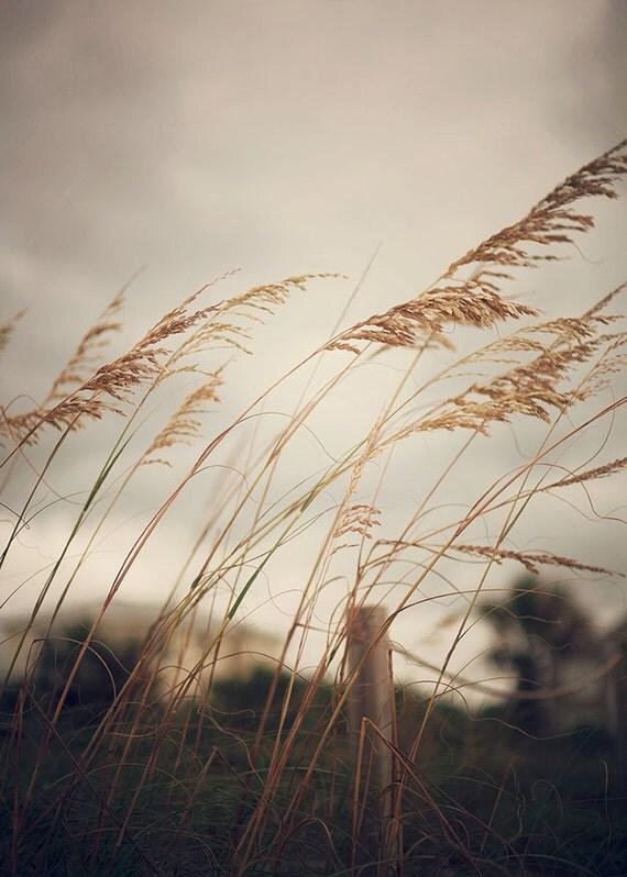 Wild Oats to Sow - Photographic Print - Sea, Oats, Beach, Summer, Ocean, Coastal, Coast, Shore, living, decor, wall, hanging, natural