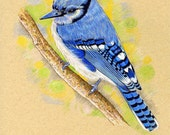 Birthday Greeting Card Blue Jay