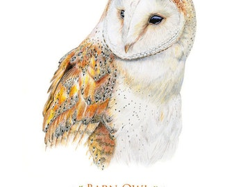 Barn Owl Giclee Art Print 8 x 10 or 11 x 14 inches. Original was created in colored pencil
