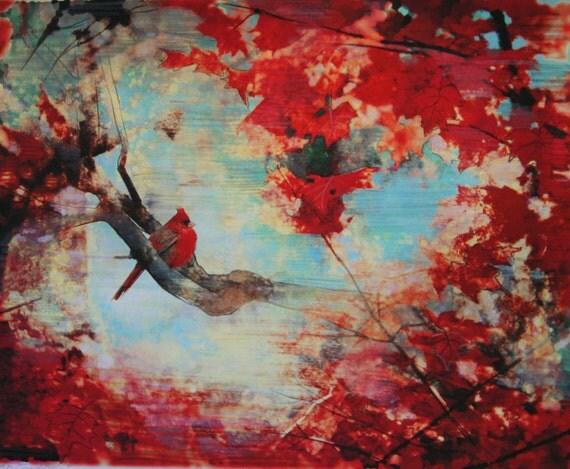 On Sale, Autumn Cardinal, 8x10, art, photography, nature, Cardinal, Fall, fine Art photograph, red decor, Fall decor, aqua