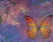 LARGE POSTCARD Butterfly Light