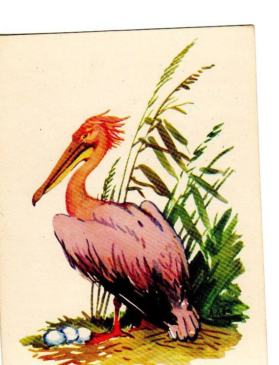 Vintage Rose Pelican postcard, artist A.M. Laptev