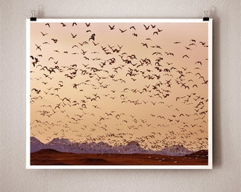 SPRING MIGRATION - 8x10 Signed Fine Art Photograph