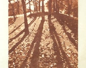Light in the Forest, Linoleum Reduction Print