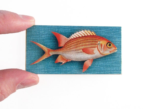 Red snapper fish magnet fishing magnet nautical by waltersilva for Magnet fishing tips