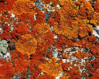Lichen Nature Rock Orange Rusts Rustic Cabin Lodge Photograph