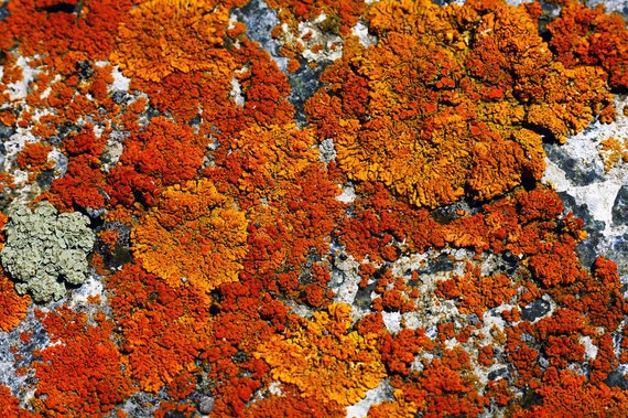 Lichen Nature Rock Orange Rusts Rustic Cabin Lodge Photograph