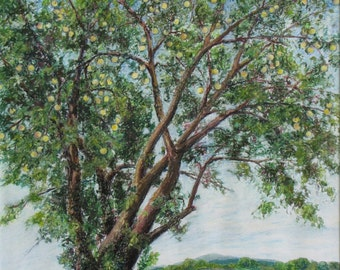 "Art Original Drawing Oil Pastel Landscape Autumn Apple Tree Appalachian Eastern Townships Quebec Canada Audet "" In the Heart of Fall """