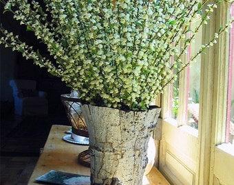 Flower Vase Aspen Bark