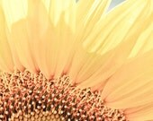 Sunflower Photography yellow bright summer sunny canary petals sunshine cottage - I've got something I can laugh about. - fine art photo