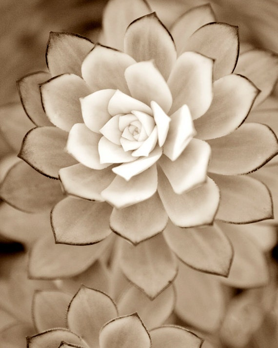 Autumn brown photograph, Succulent plant,  Feminine fine art black and white photography