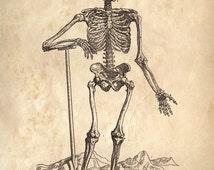Vintage Anatomy Reproduction Print. Standing Skeleton. Human Body. Bones Educational Biology Chart Diagram Poster  - CP113