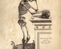 Vintage Anatomy Reproduction Print. Leaning Skeleton. Human Body. Bones. Andreas Vesalius Educational Biology Diagram Chart - CP111