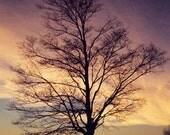 Sunrise of a Tree and a Farm House Silhouette Fine Art Photo