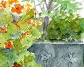 garden watercolor- Fluffy Chicken- panorama 4x12 print