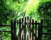 Tropical Rainforest Photograph - Woodland Art Print - Green Home Decor - Gate Fine Art Print - Natural Tropical Island Photo - Dominica