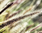 Macro photography nature photography grass green brown pastel wall art  Fine Art Photography Print