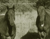 Horse Lovers Handcrafted Greeting Card  Equine Photography in Sepia Two Grazing Bay Horses Enjoy the Day