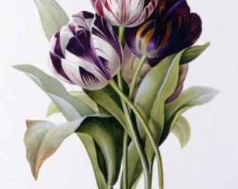 Tulips - Cross stitch pattern pdf format