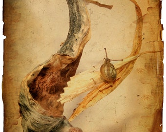 nature photography, still life, snail,cottage chic, shabby chic, milkweed, sepia, tan, brown, soft, nature, Fine Art Print 8x10