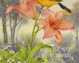 Oriole and Orange Daylily Giclee Fine Art Floral Bird Print, Yellow, Gold, Green, Signed A E Ruffing, on 8.5 x 11 inch art paper