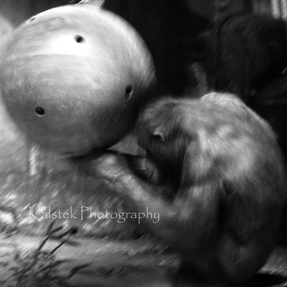 Orangutan Photograph Black and White Animal Nature Ape Monkey Spinning Ball 8x8 Wall Art