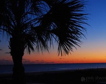 Palmetto Tree Beach Sunset Fine Art Print