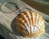 Sea Shell Soap on a Rope - Hemp Soap - Lemongrass Essential Oil - More Colors Available - Handmade Soap  - Wedding Favors