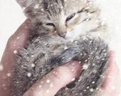 Kitten Photography, Nursery Wall Art, Kitten in the Snow, Baby Animal Art, Grey White Wall Art, Picture of a Kitten, Cute Kittens 8x10 Print