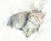 Kitten Photography, Nursery Decor, Kitten On a Cloud, Sleeping Kitten Photo, Sleeping Baby Animal Art, Cute Kitten Picture 8x10 Print