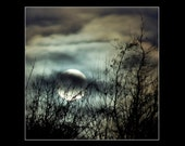 Wolf Moon 10 x 10 lustre finish full moon photograph, tree silhouette, night sky, teal, rust, amber, charcoal, silver, clouds, mystical