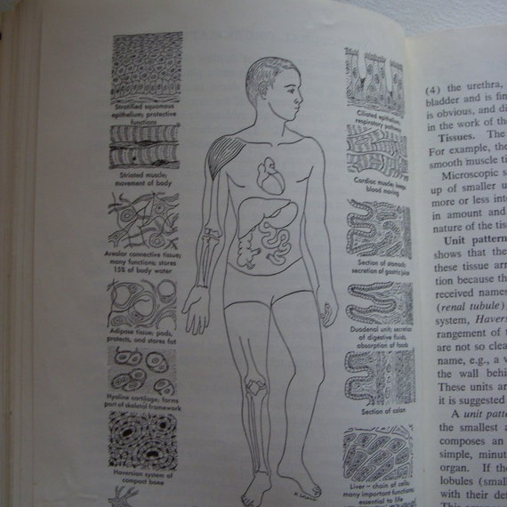 1957 Textbook of Anatomy and Physiology