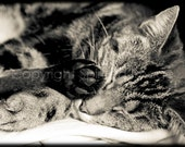 Sleeping TABBY CAT - Photo Print - Talk to the Paw, animal photography, restful, rustic,
