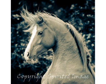 ARAB HORSE - KNIGHT, Edition Print, Horse photography, Equine, Wall Decor