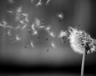 Dandelion Wishes - Original Fine Art Photograph, FREE SHIPPING