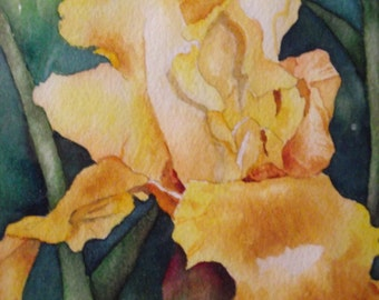 Yellow Iris Painting Original Watercolor and Frame