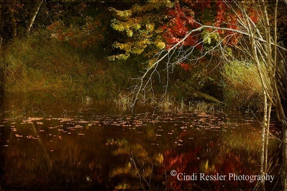 Weeping Branch, Photography, Landscape Photography, Nature Photography, Maine Photography