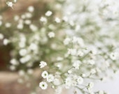 Baby's Breath Photograph, Shabby Chic, Cottage Chic Home Decor, Feminine White and Green Color Fine Art Photography Wall Print