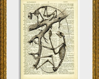Dictionary page print PLAYFUL MONKEY SKELETONS - antique dictionary page with a fun antique illustration- upcycled vintage art - home decor
