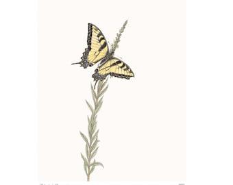 Western Tiger Swallowtail Vintage Style Print