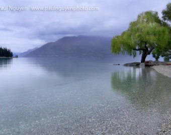 Willow Tree on Lake photograph print, 10x15 print matted on white 16x20 mat. Willow on Lake Wakatipu, Queenstown, New Zealand