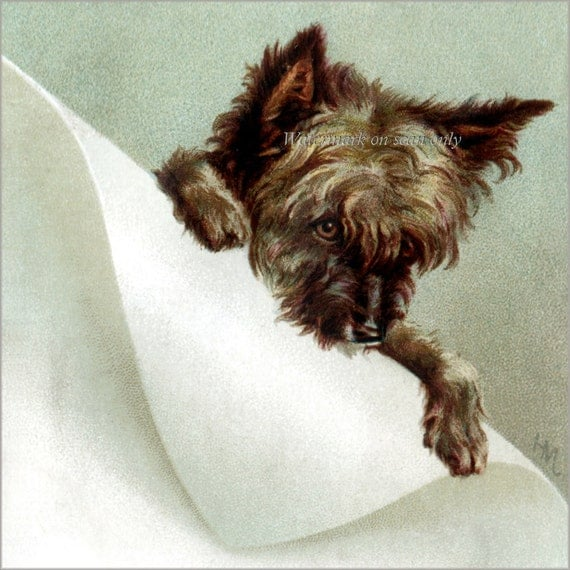 Terrier Dog Fabric Block from Vintage Image - Cairn Terrier