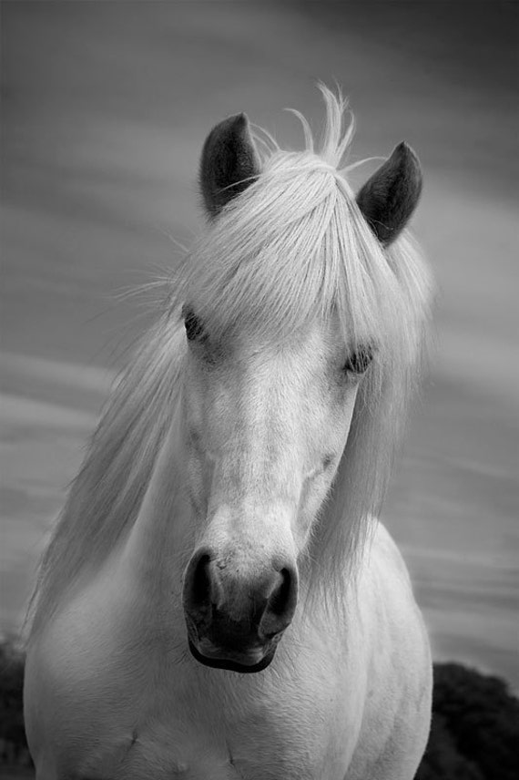 Horse photo black and white horse home decor white horse - Home interior horse pictures for sale ...