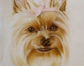 Custom Pet Portraits, Yorkie, Yorkshire, Terrier, Colored Pencil, Drawing, Illustration, Custom Dog